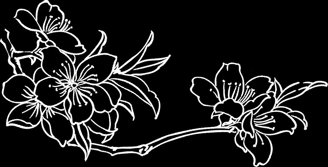 Fleur de l'Amandier Gauche