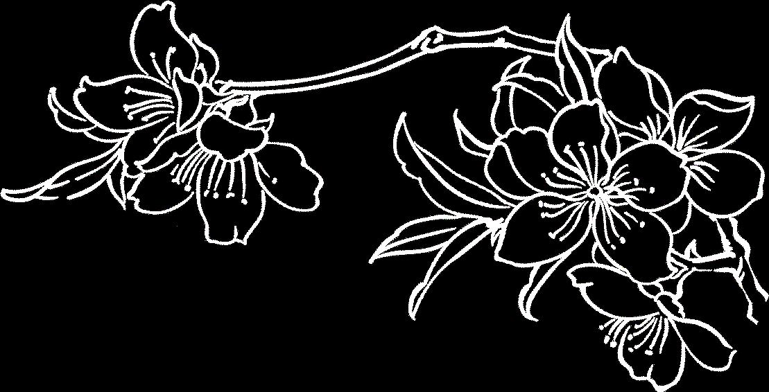 Fleur de l'Amandier Left